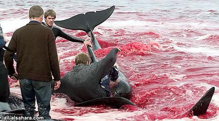 Молодь вбиває дельфінів