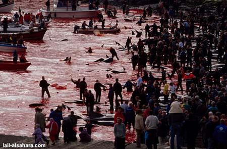 Масове вбивство дельфінів
